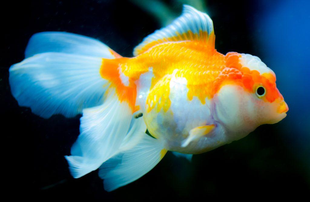 Dreaming of Fish Swimming