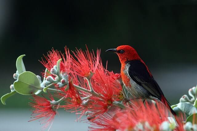 Swallow Bird Symbolism