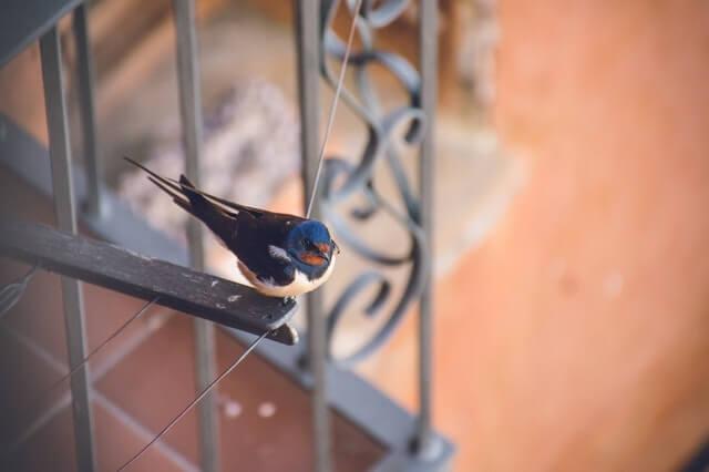 swallow-symbolism