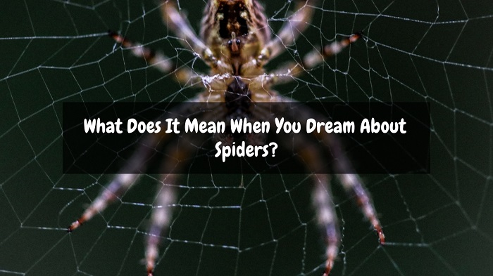 what does it mean when you dream about spiders