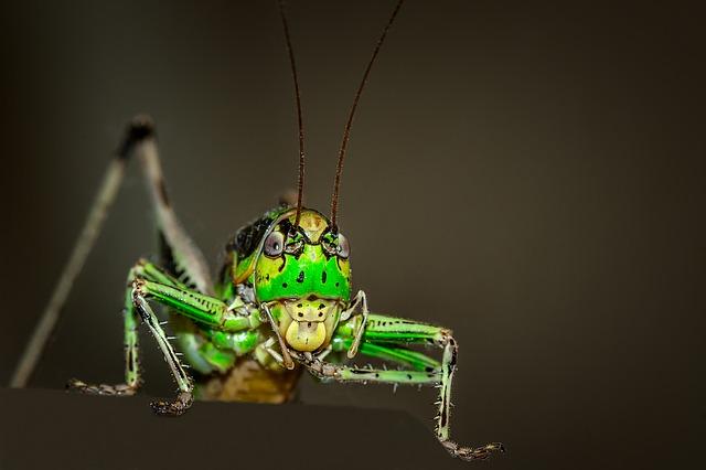 Grasshopper Symbolism: Spirit Animal