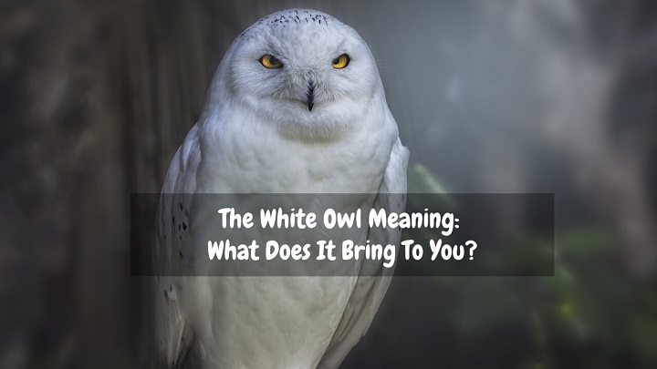 white owl meaning