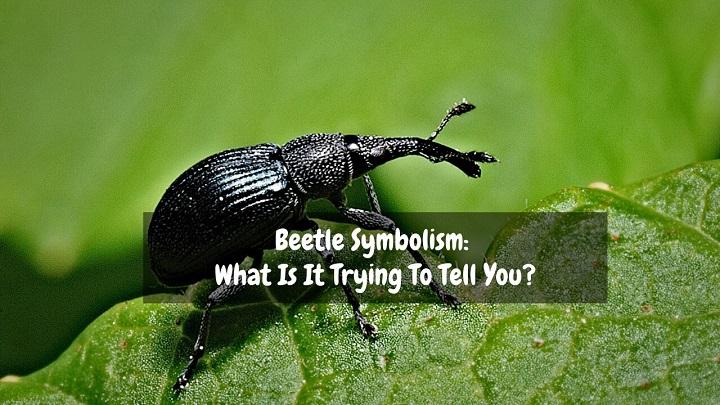 beetle symbolism