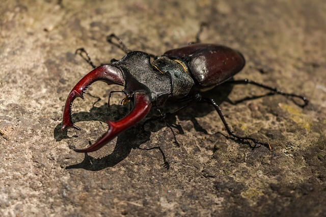 Beetle Totem