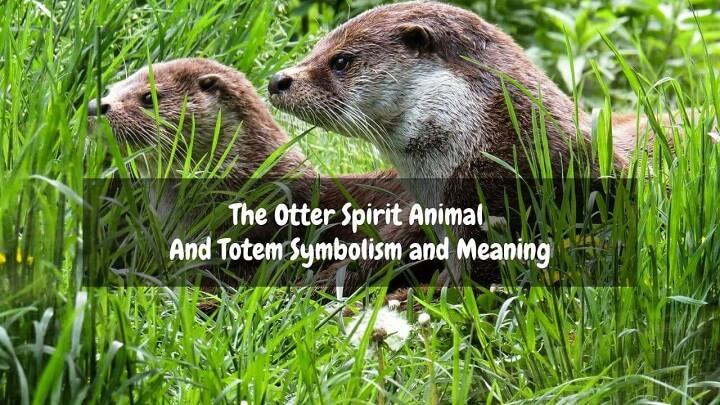 otter spirit animal