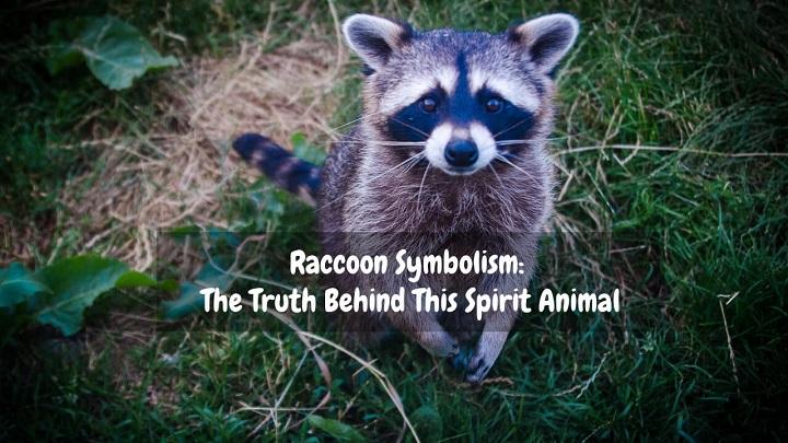 raccoon symbolism