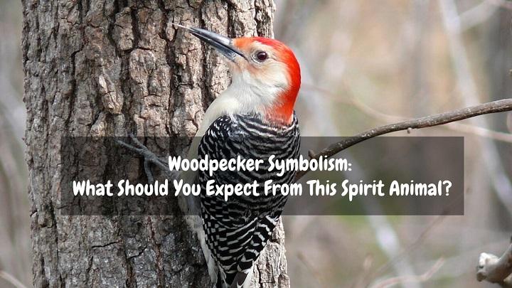 woodpecker symbolism