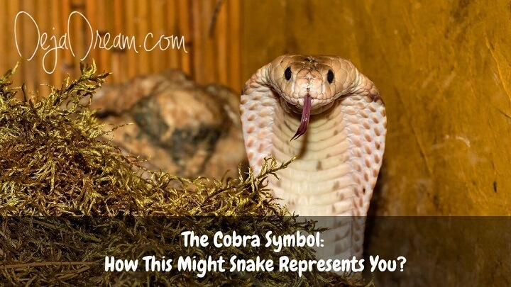 cobra symbol