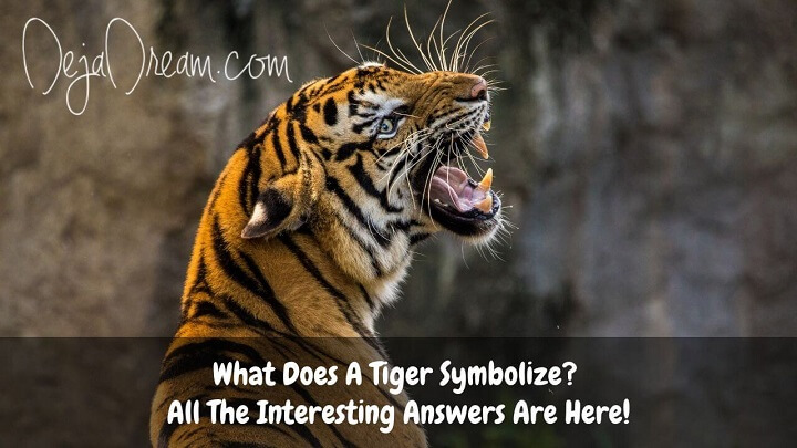 what does a tiger symbolize