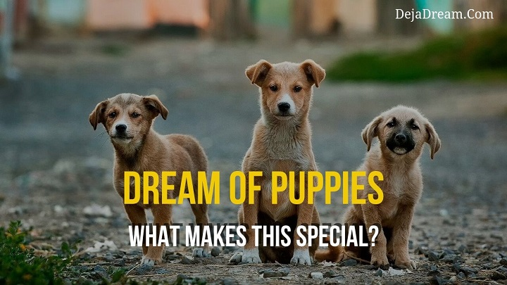 dream puppies