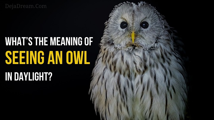 meaning of seeing an owl in daylight