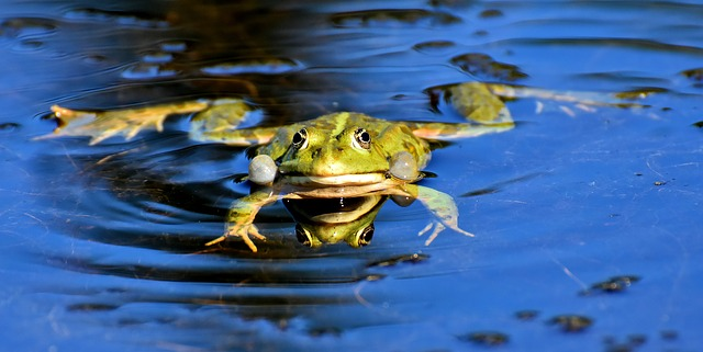 what does it mean when you dream about frogs