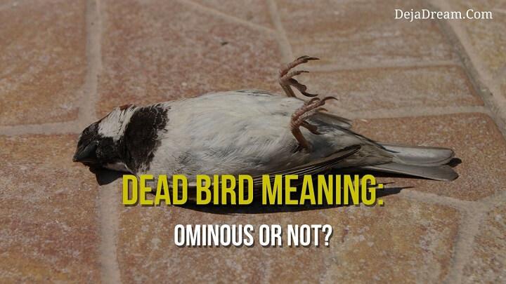 dead bird meaning
