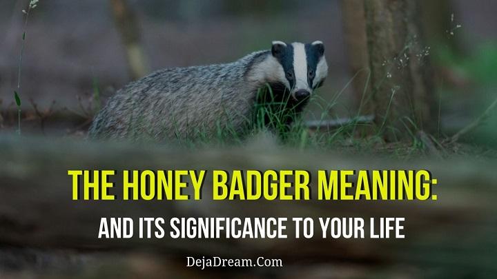 honey badger meaning
