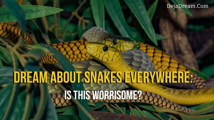 dream about snakes everywhere