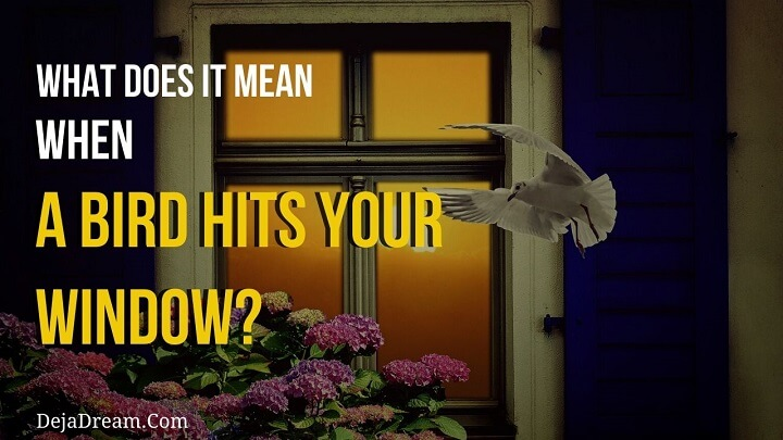 what does it mean when a bird hits your window