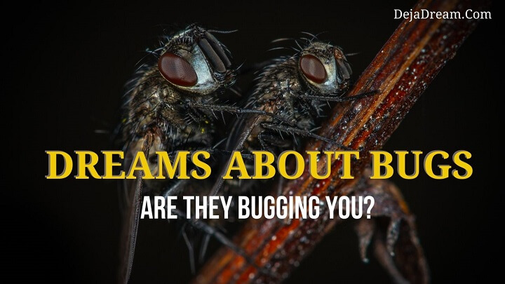 dreams about bugs