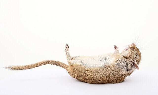 Dead Mouse In Dream - Mouse Symbolism