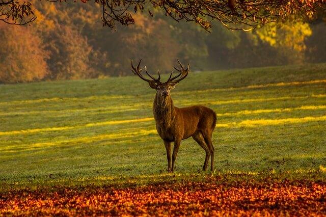 Pursuit of Adventures - Deer Symbolism