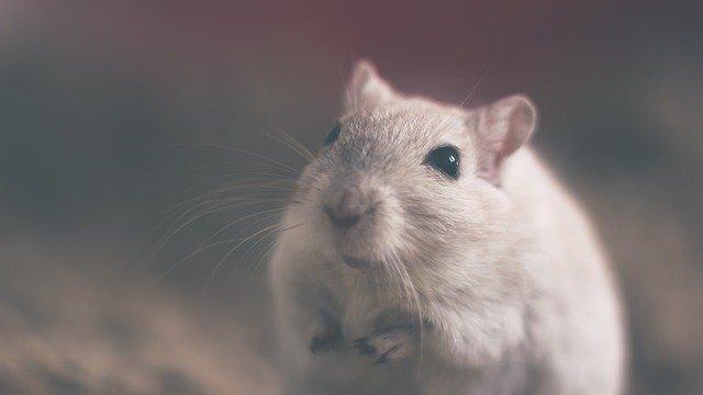 Appreciation To Life - Mouse Symbolism