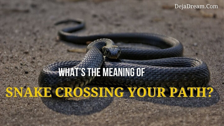meaning of snake crossing your path