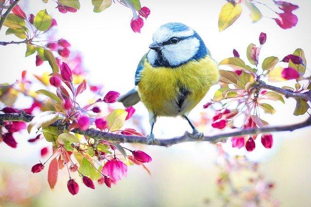 Bluebird Symbolism Native American