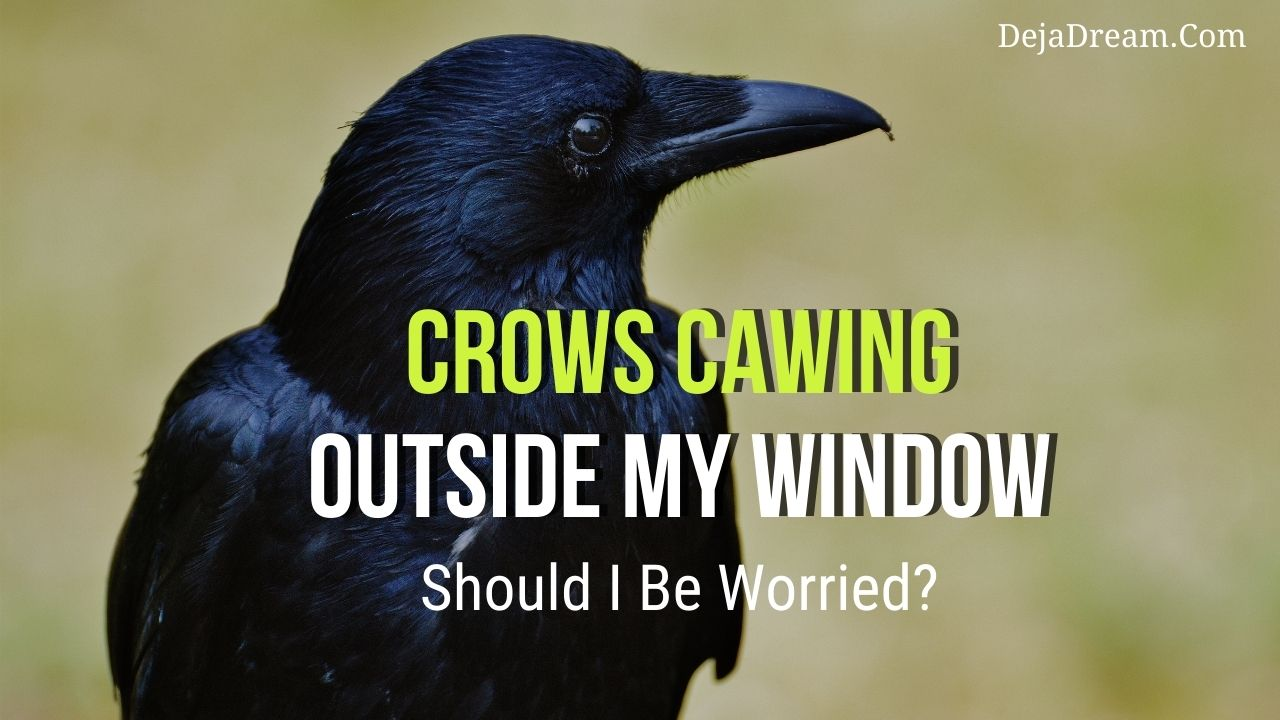 crow cawing outside my window
