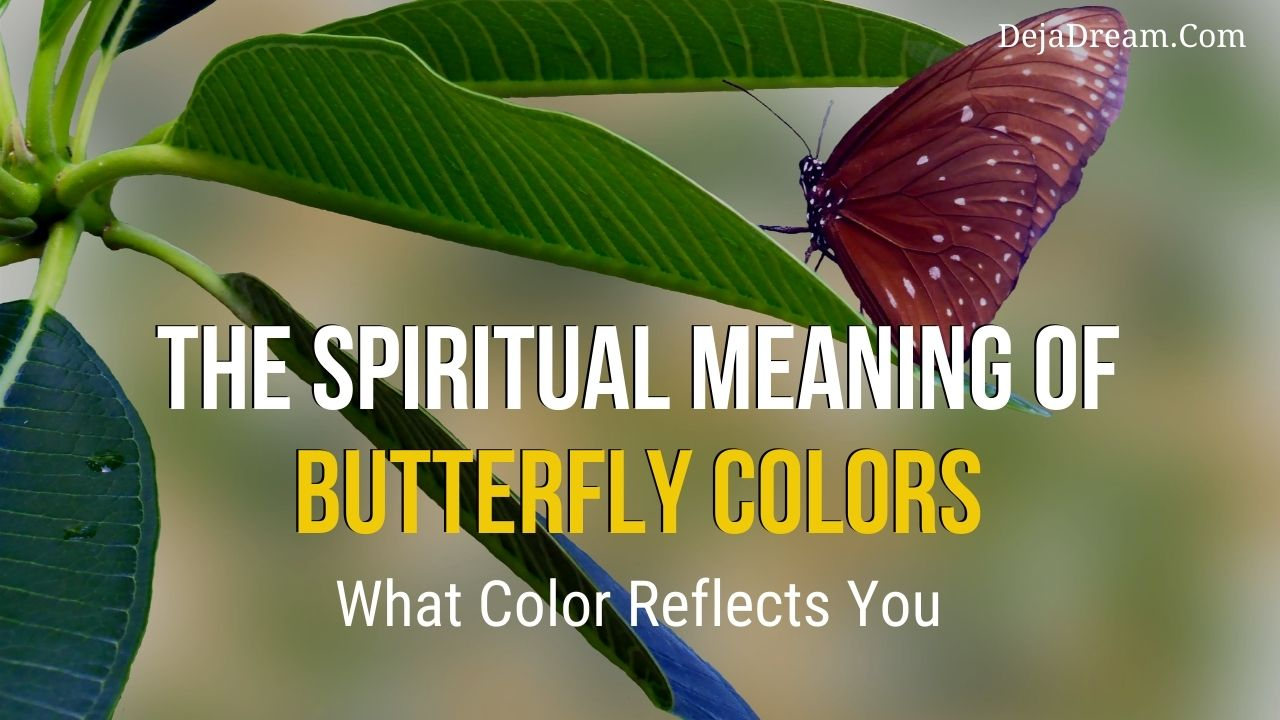spiritual meaning of butterfly colors