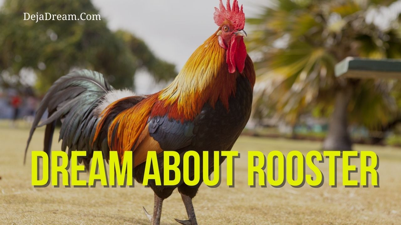 dream about rooster