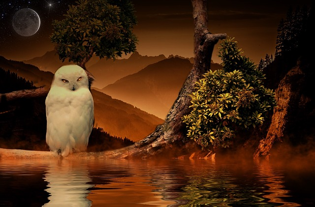 Common dreams - Dreaming Of White Owls