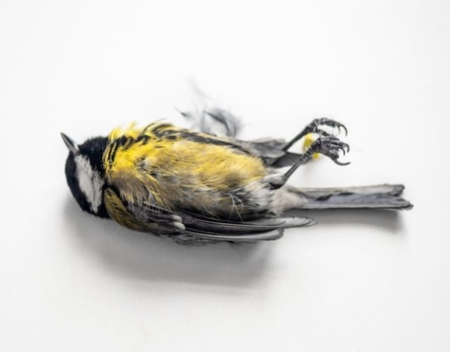 Common Dream Meanings - Dead Bird Meaning